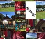 Waitangi Photos